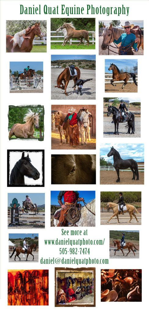 Horse Photography, Equine Photography