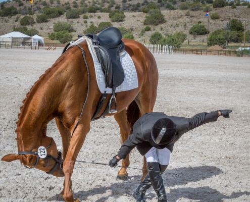 equine photography, dressage photography