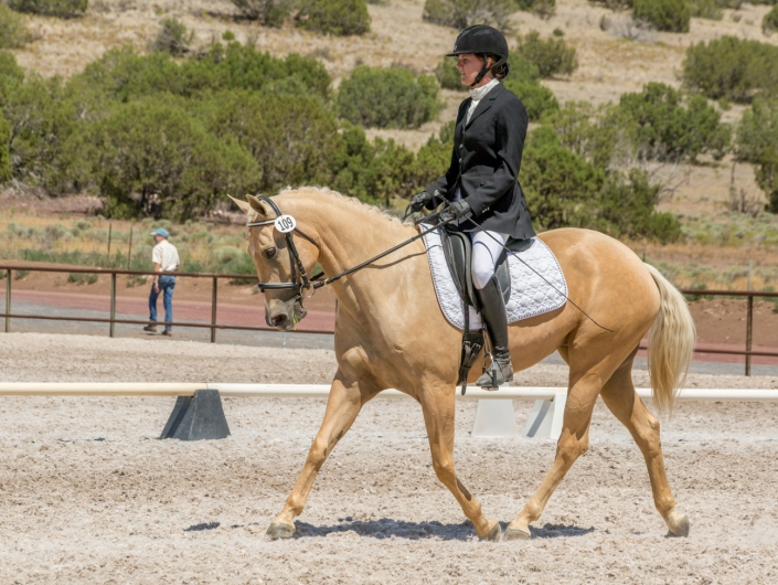 Best Equine Horse Photography Santa Fe NM