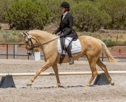 equine dressage photography
